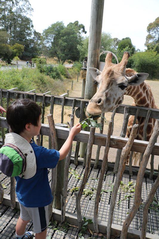 オラナ・ワイルドライフ・パーク(動物園)に行ってきました